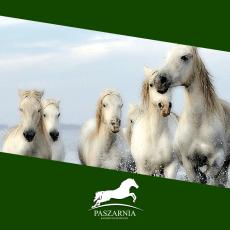 Produkty dla koni