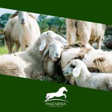Produkty dla owiec
