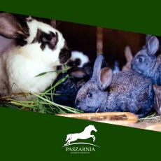 Produkty dla królików
